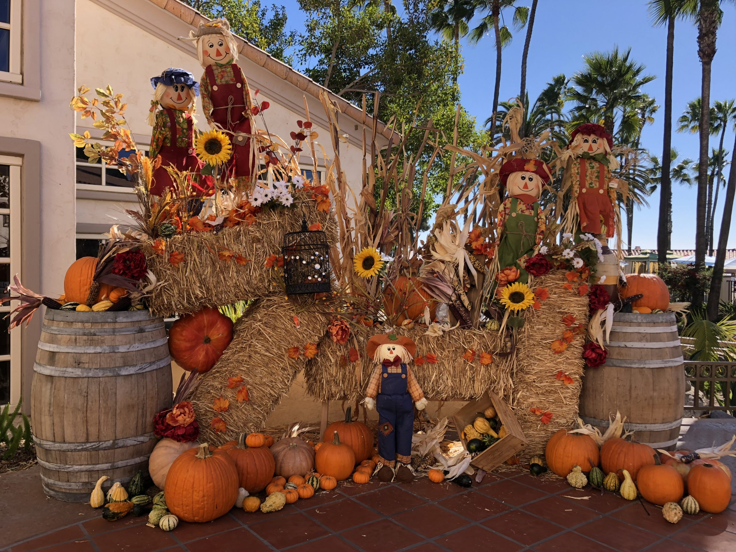 Fall scarecrows & pumpkins