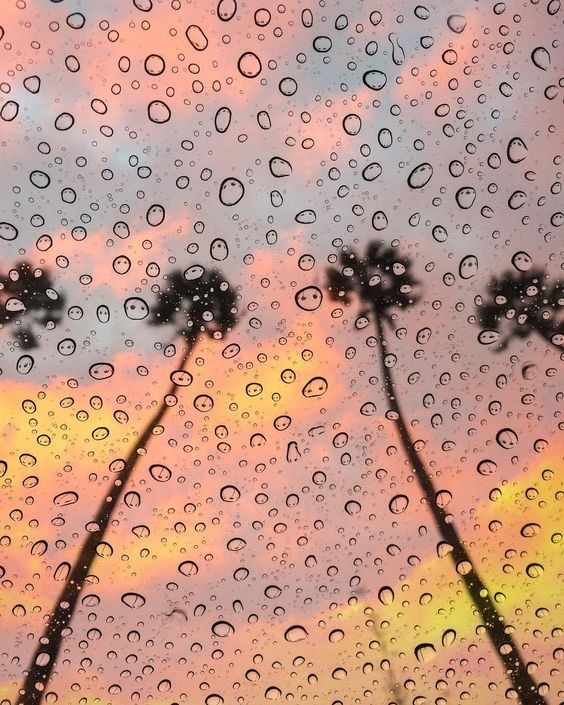Palm Trees in the sunset with rain