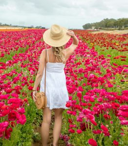 A girl in a white sundress at the Carlsbad Flower Fields